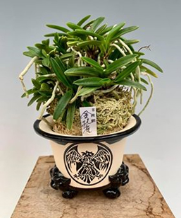 Photo of Scott Laskowski's Orchid and Pot