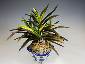 Photo of Diane McDowell's Orchid and Pot